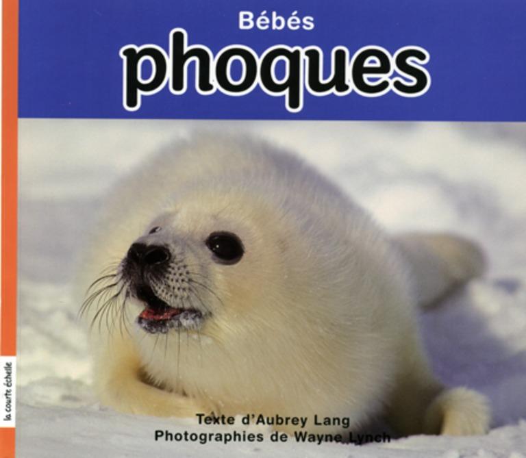 Bébés phoques