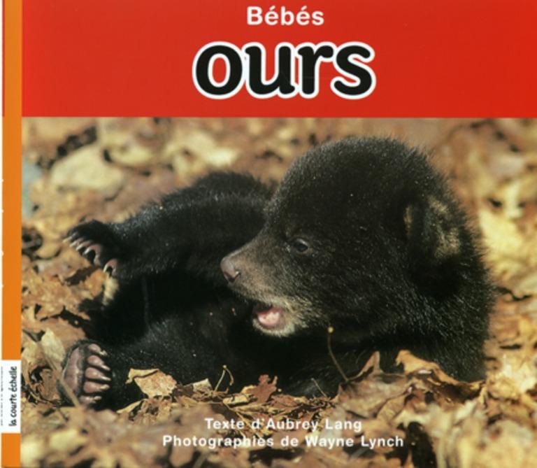 Bébés ours